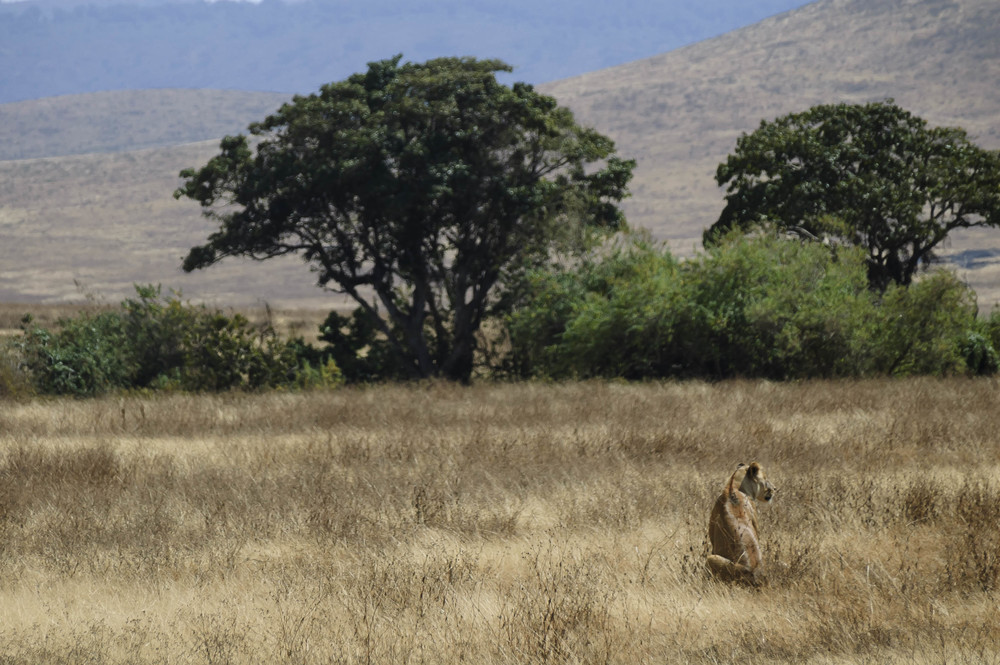 Tanzania6.jpg