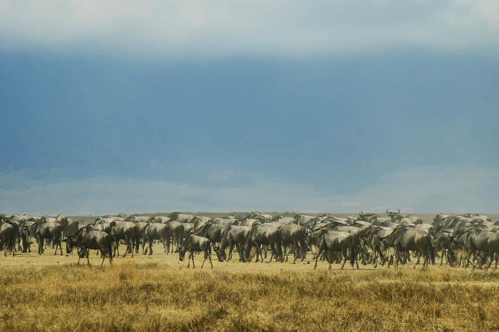 Tanzania5.jpg