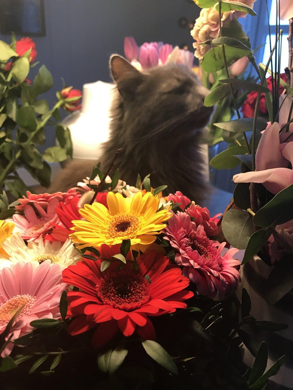 Et blomsterhav av gratulasjoner!! Katten vår lukter lukter på blomstene.