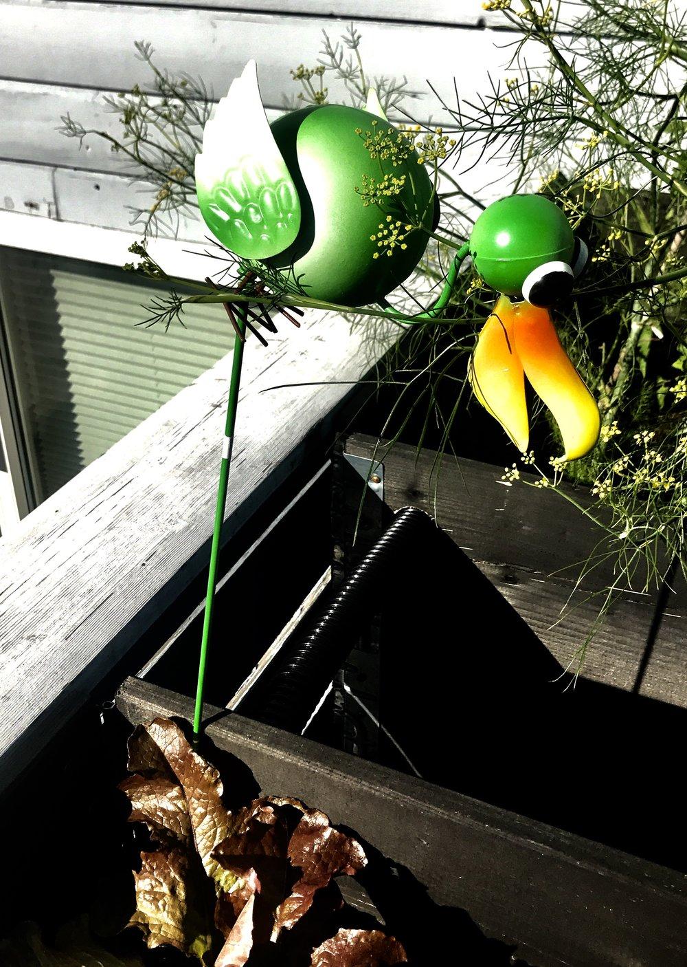 Plasthegra Anton skremmer nifse fugler bort fra salaten.