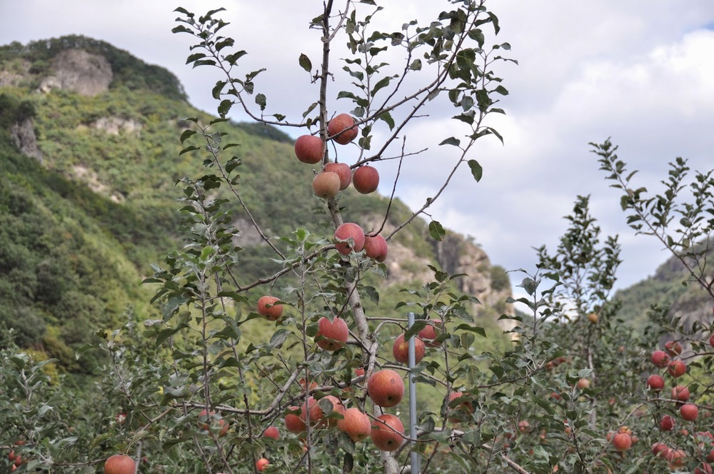 This region is famous for its apples