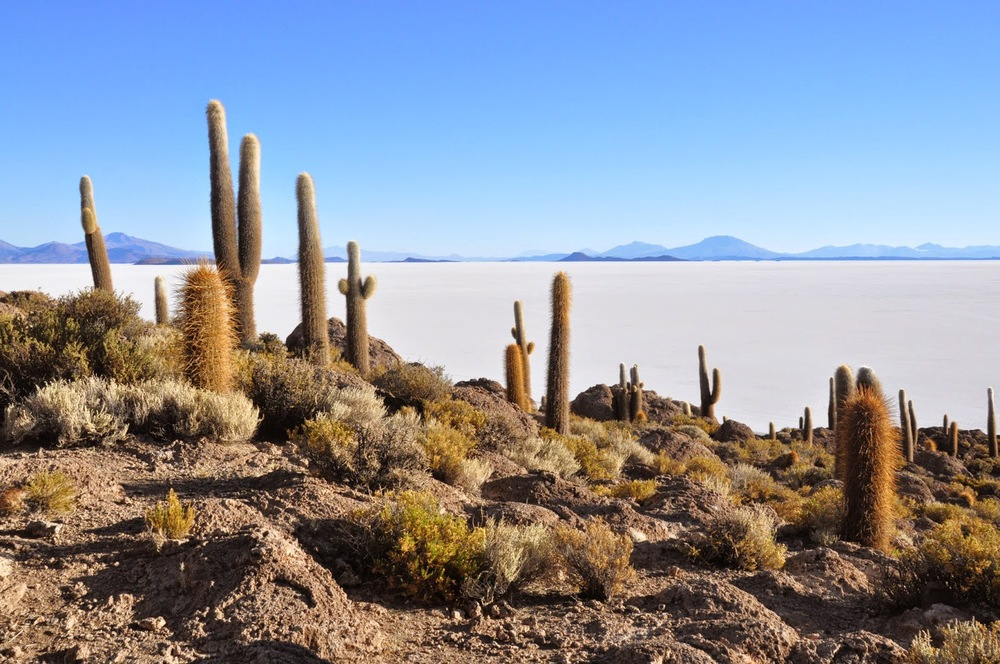 Fish Island is covered in cacti and has some of the most stunning views of the Salt Flats.