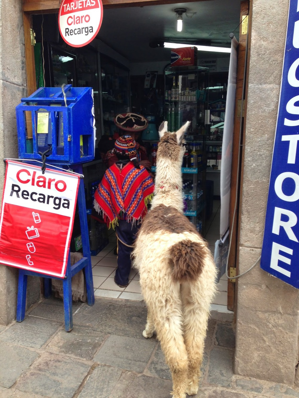 It's normal to take your llama to the store, right?