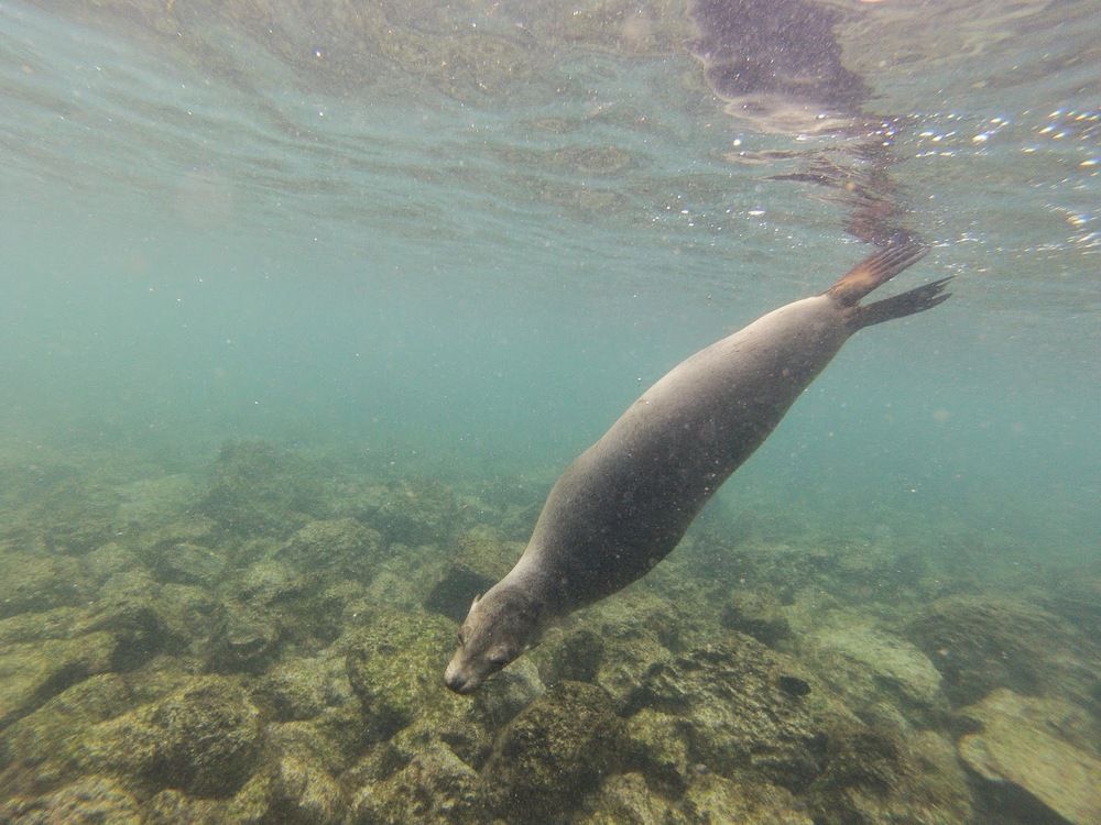 Sea Lions Galapagos Islands Ecuador