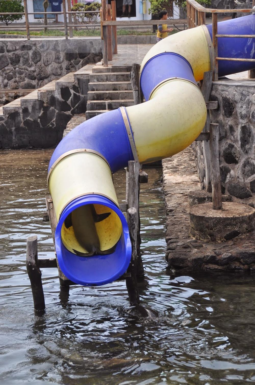 Sea lion slide!