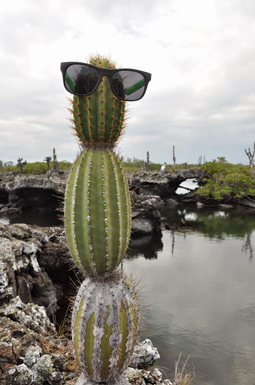Instead of a snowman, we built a...cactusman?