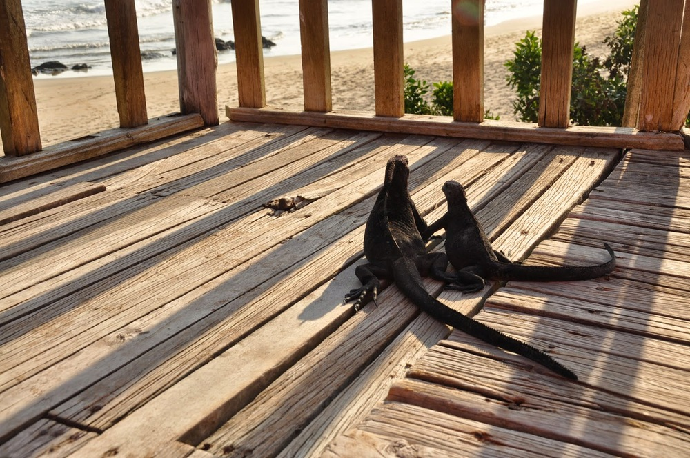 True to its name, there were iguanas sunning themselves all around the hostel.