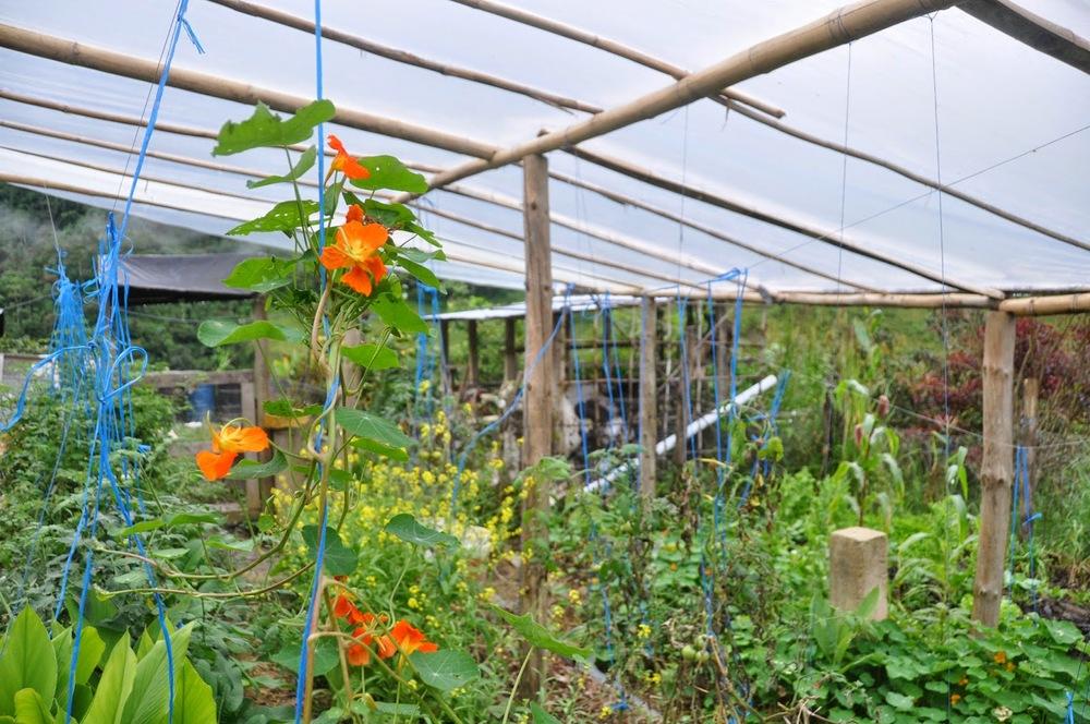 Finca Verde Farm Ecuador