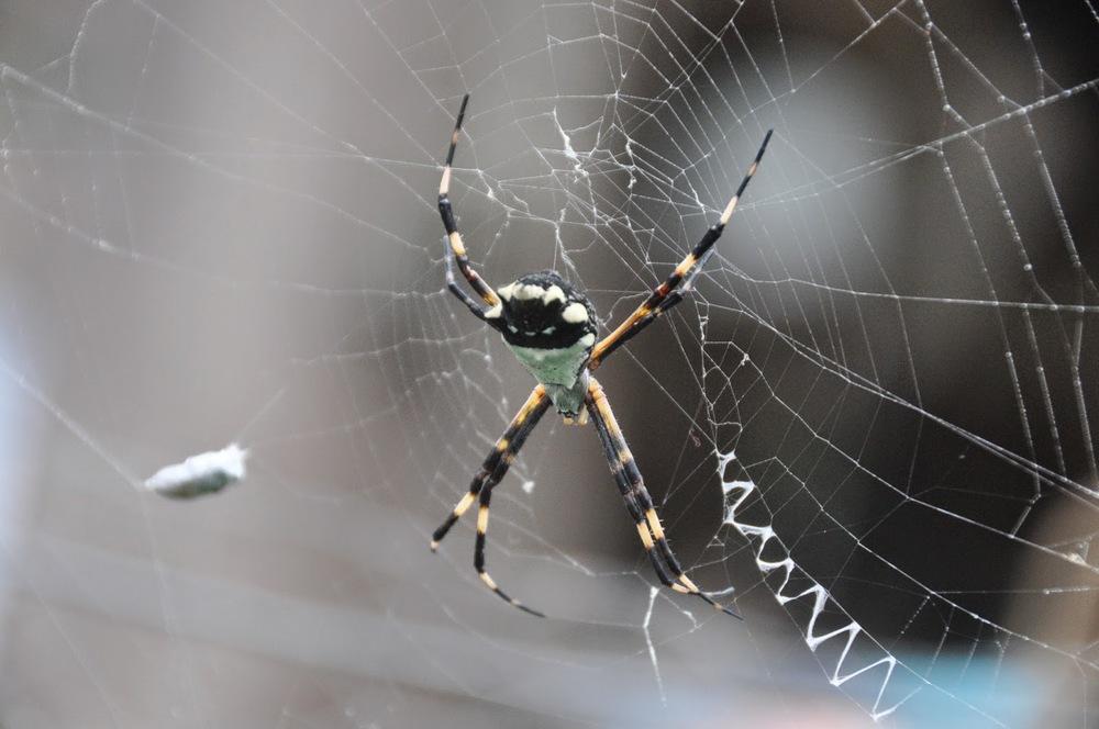 Spider Finca Verde Farm Ecuador