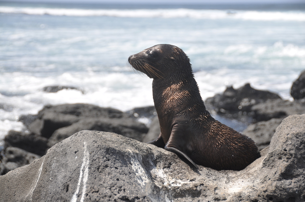 Baby sea lion. Isn't this just the cutest thing you've ever seen?!