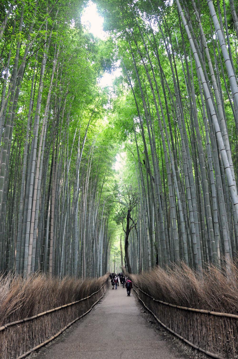 Arashiyama Bamboo Forest Japan