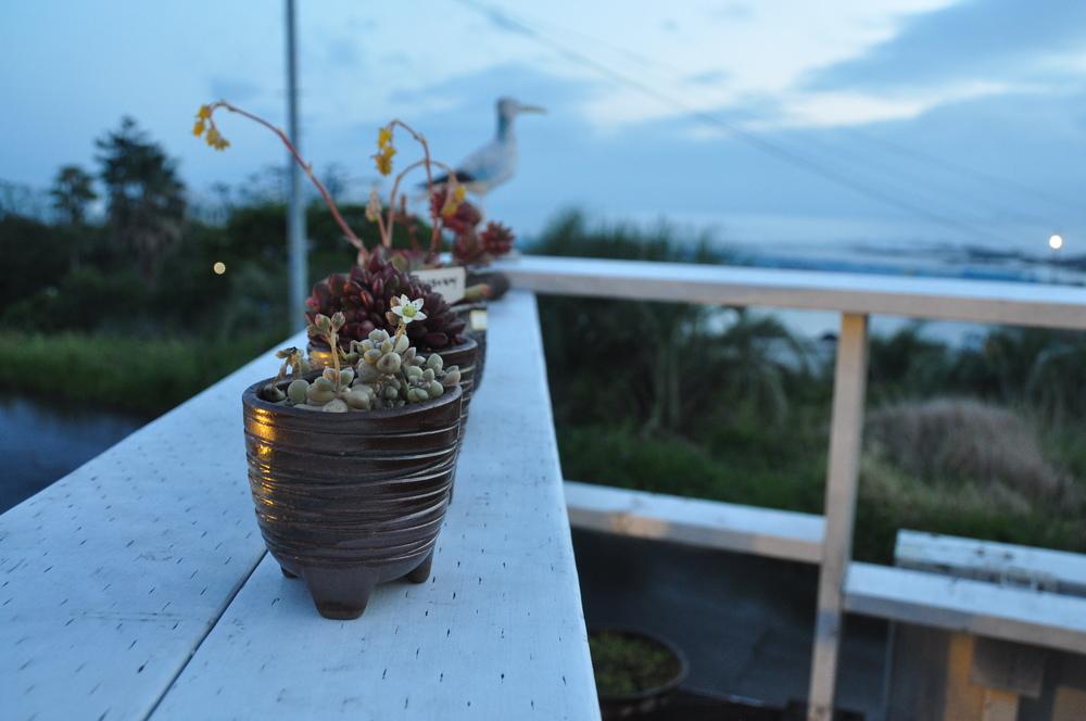 Doldam Guesthouse Jeju Island