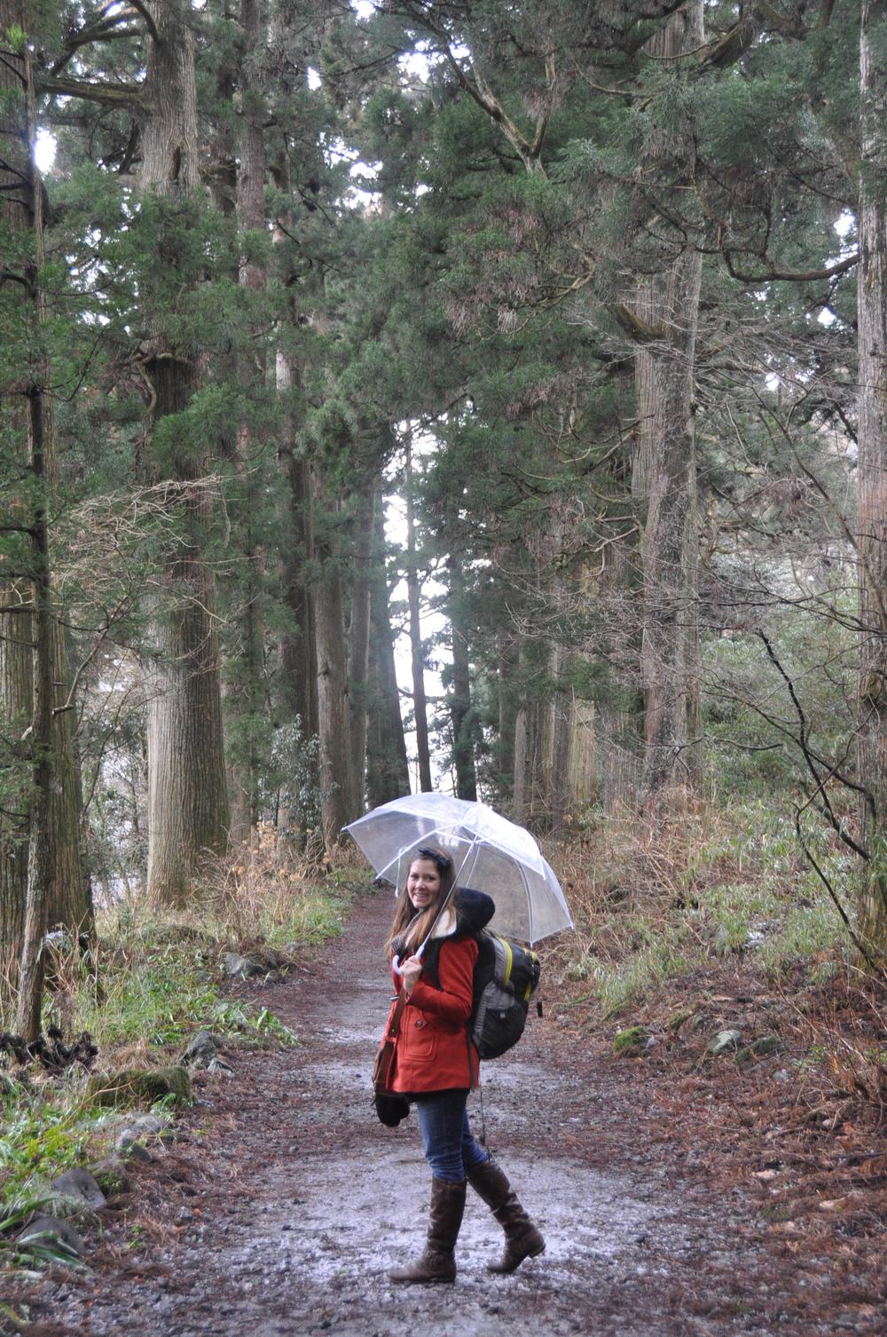 Cedar Tree Forest Hakone Japan Rain