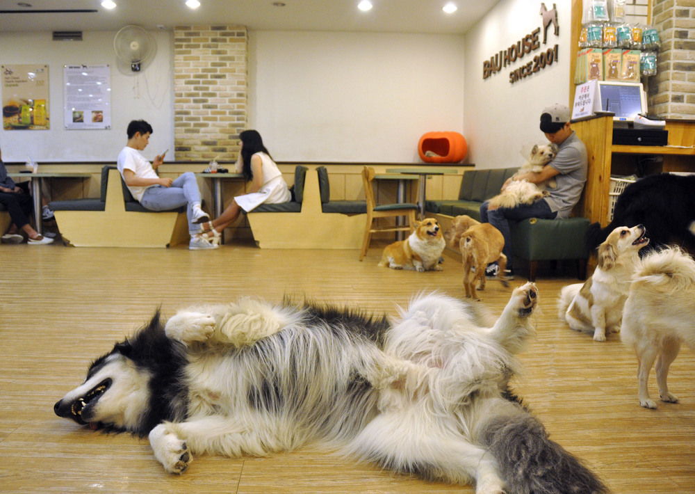 Dog Cafe Korea Bucket List