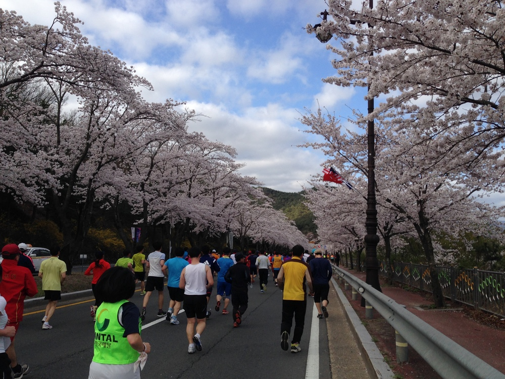 Cherry Blossom Race Gyeongju Korea