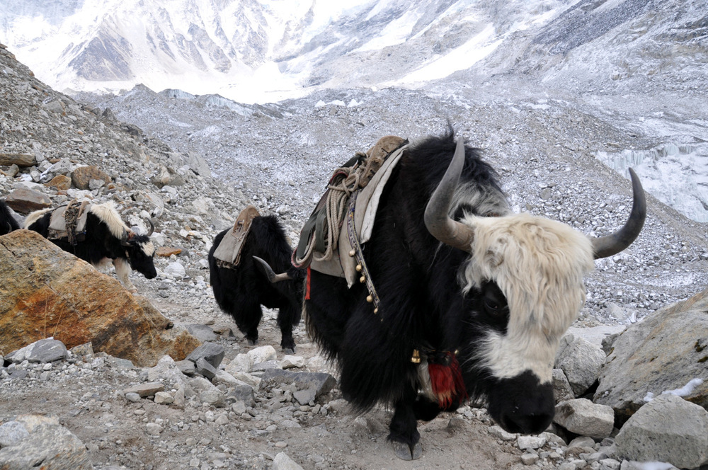 Yak Perfect Everest Base Camp Trekking Itinerary