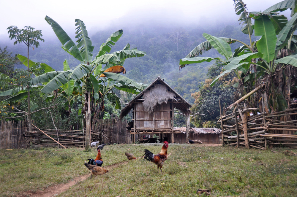 Remote Hill Tribe Homestay in Laos White Elephant Adventures