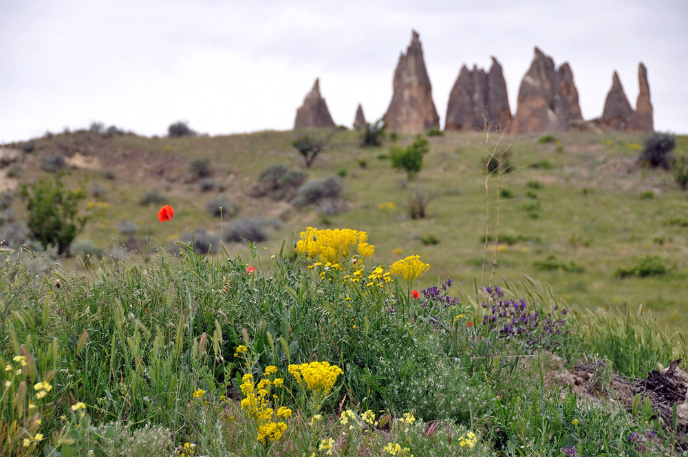 Wildflowers + Rock formations... okay, I'm in love.
