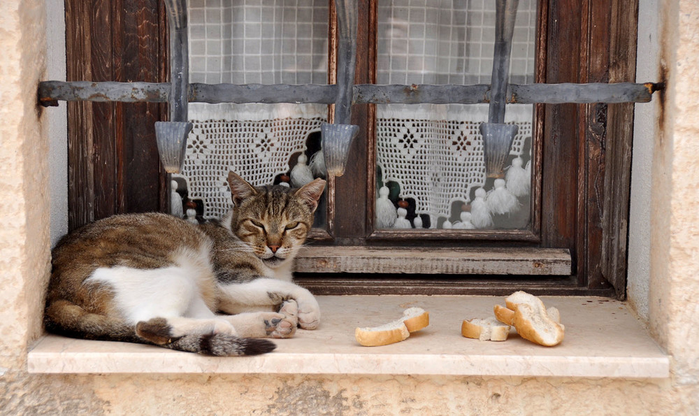 Cats in Turkey