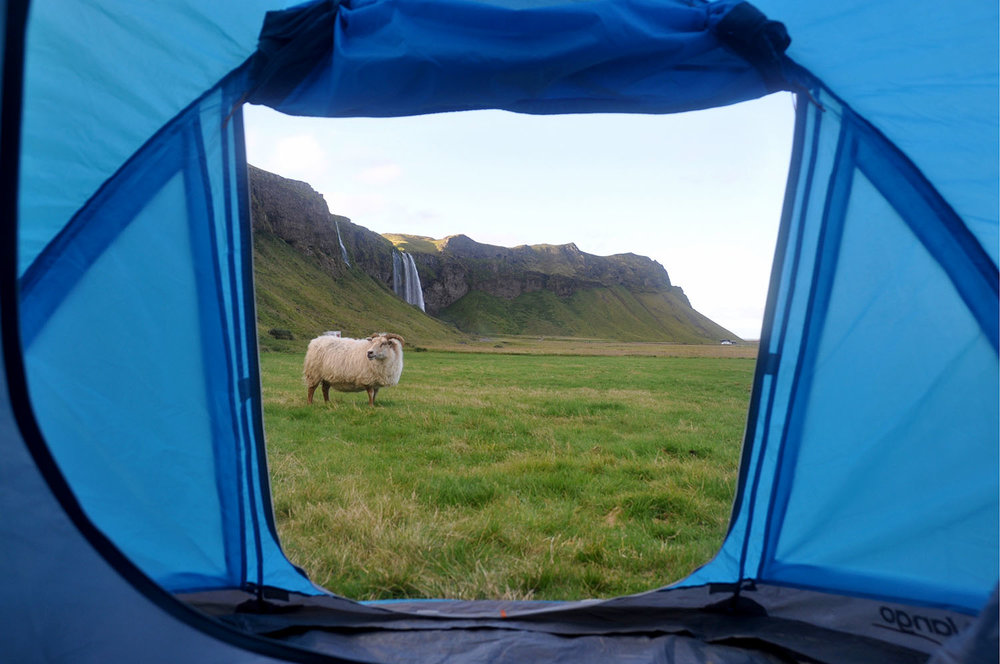 Iceland Camping Sheep and Waterfalls