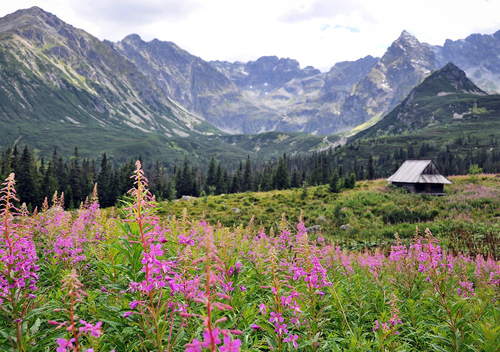 Zakopane Poland Travel Things to Do Hiking Wild Flowers