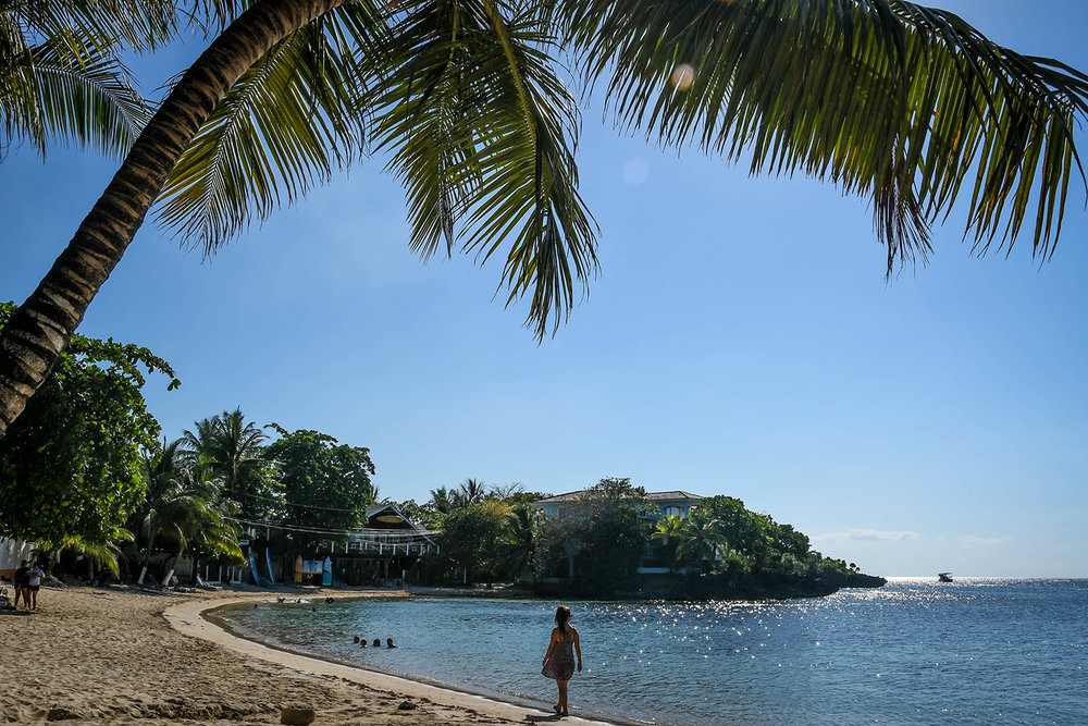Roatan Half Moon Beach Palm Tree