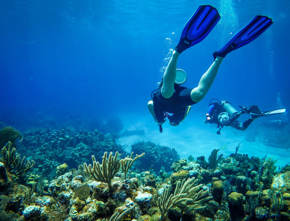 Roatan or Utila Roatan Divers Scuba Diving Bay Islands