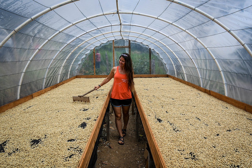 Things to Do in Lake Yojoa Honduras Coffee Farm Tour