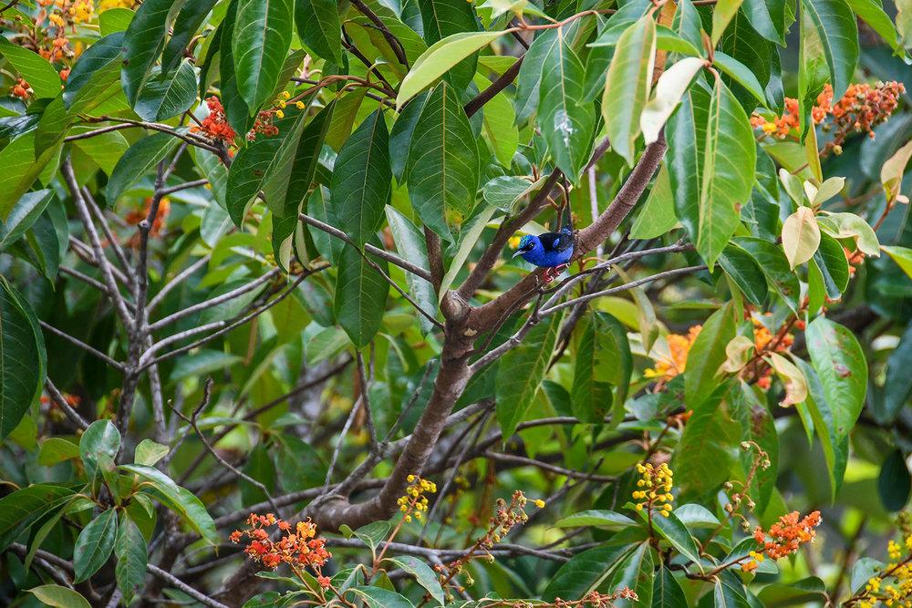 Things to Do in Lake Yojoa Honduras Bird Watching