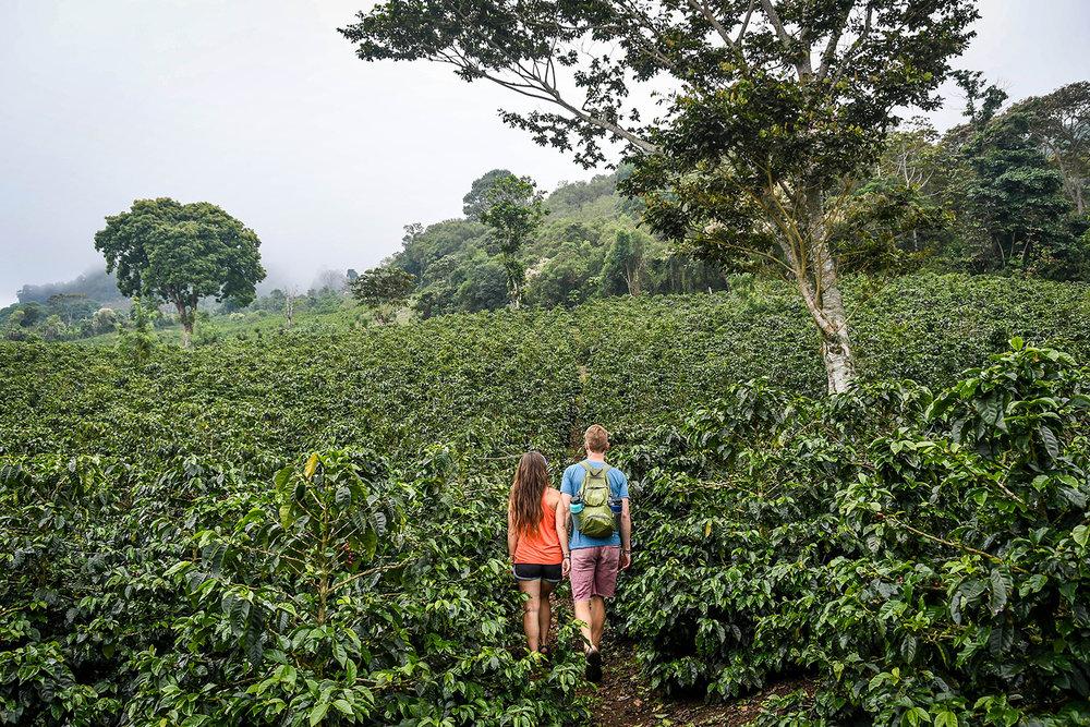 Coffee Tour Honduras Coffee Fields