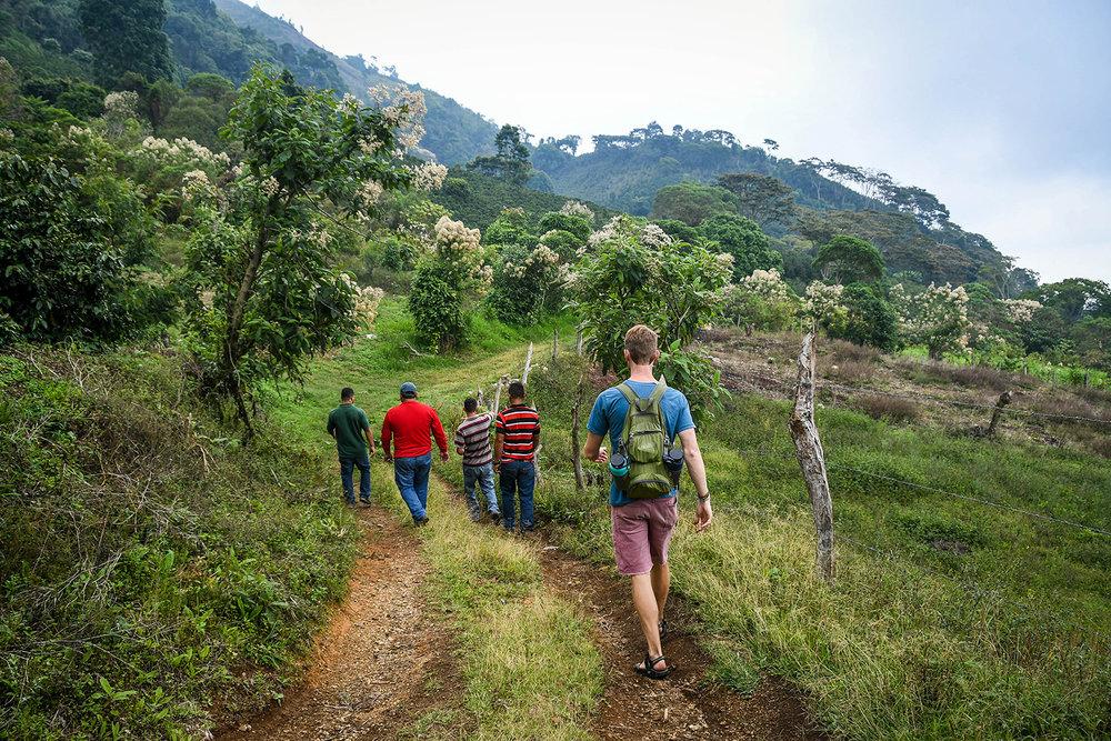 Coffee Tour Honduras Walking Coffee Field