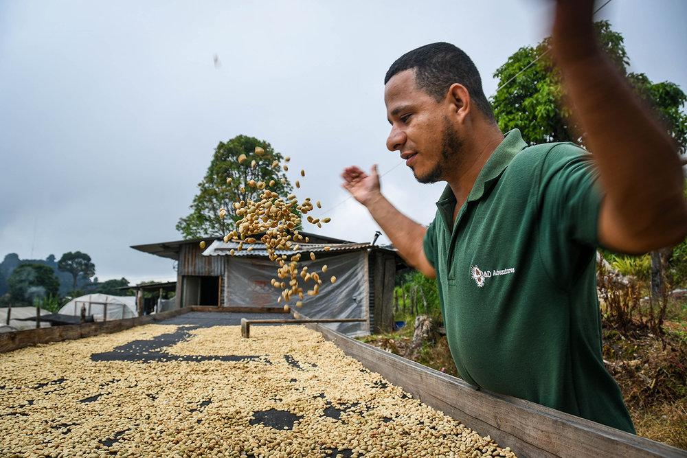 Coffee Tour Honduras Walter Drying Coffee Beans