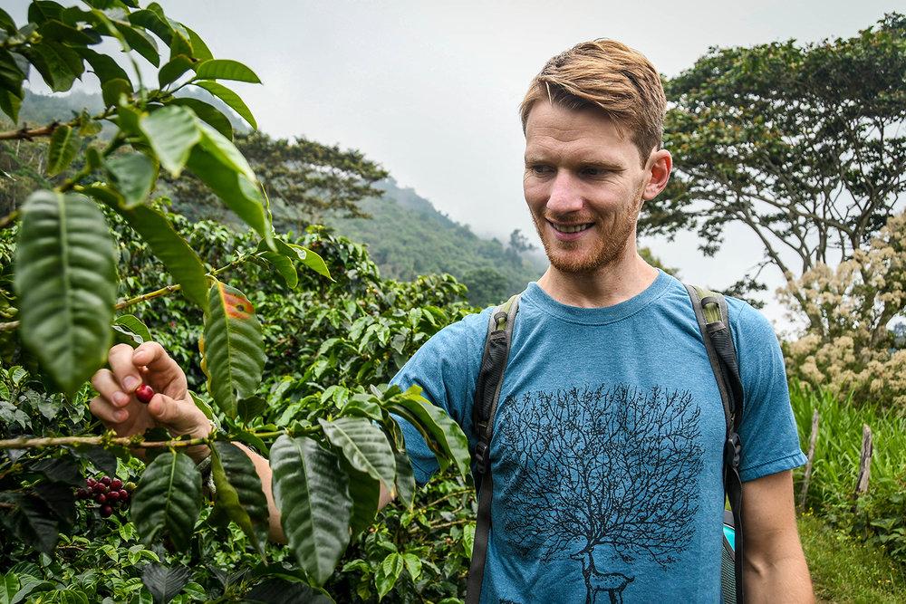 Coffee Tour Honduras Picking Coffee Beans