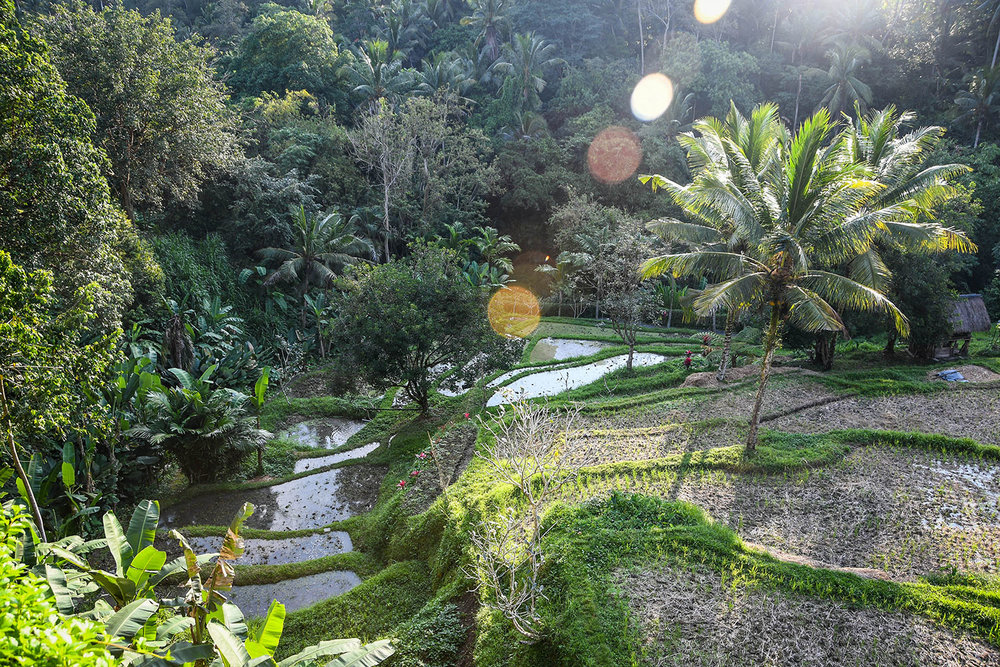 Komaneka at Bisma Ubud Resort Rice Terraces
