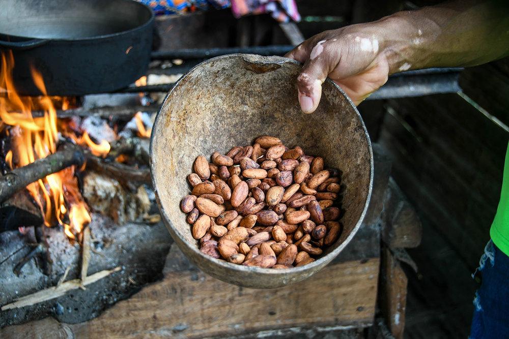 Bri Bri Indigenous Village Tour Dried Cocoa Beans