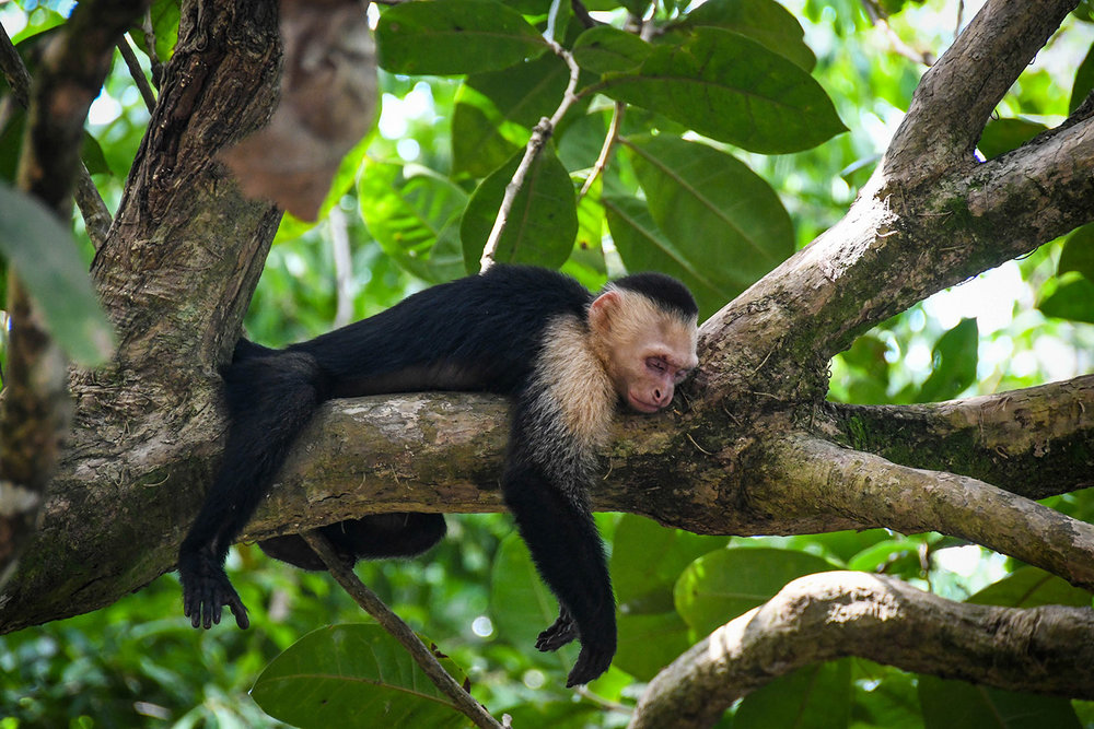 Things to do in Costa Rica Manuel Antonio