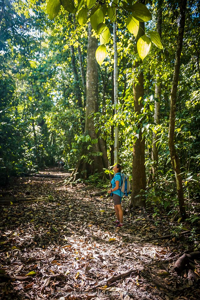 Things to Do in Corcovado National Park: Trails near the stations