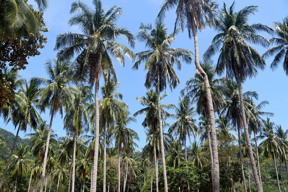 Things to do in Koh Lanta Where to stay