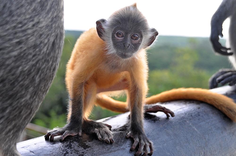 Monkey Hill Kuala Lumpur