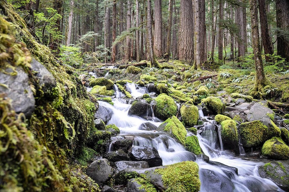 Best Things to Do in Washington State Sol Duc Falls