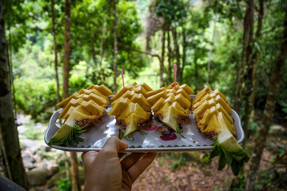 Khao Sok National Park Travel Guide Hiking Fresh Pineapple
