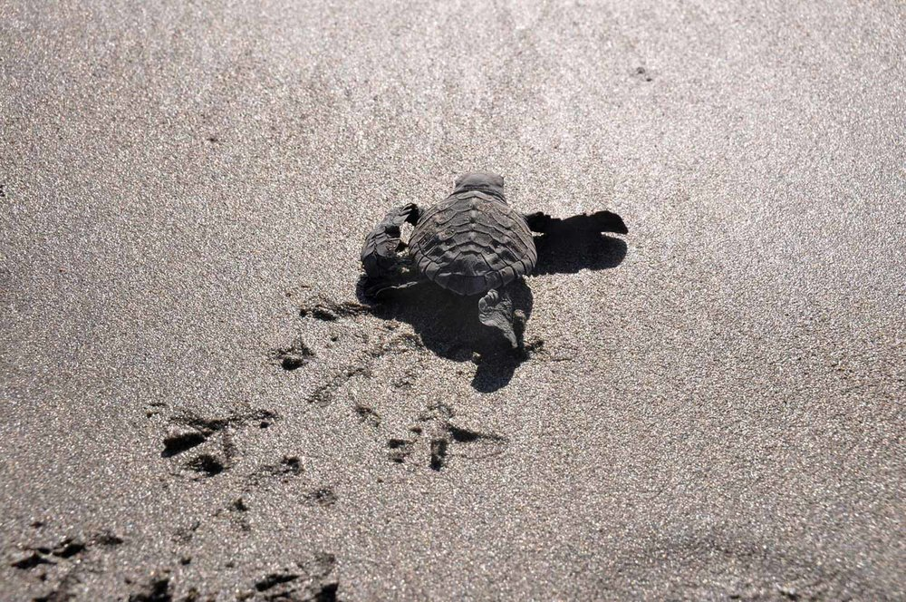 Things to do in Bali Release Sea Turtles
