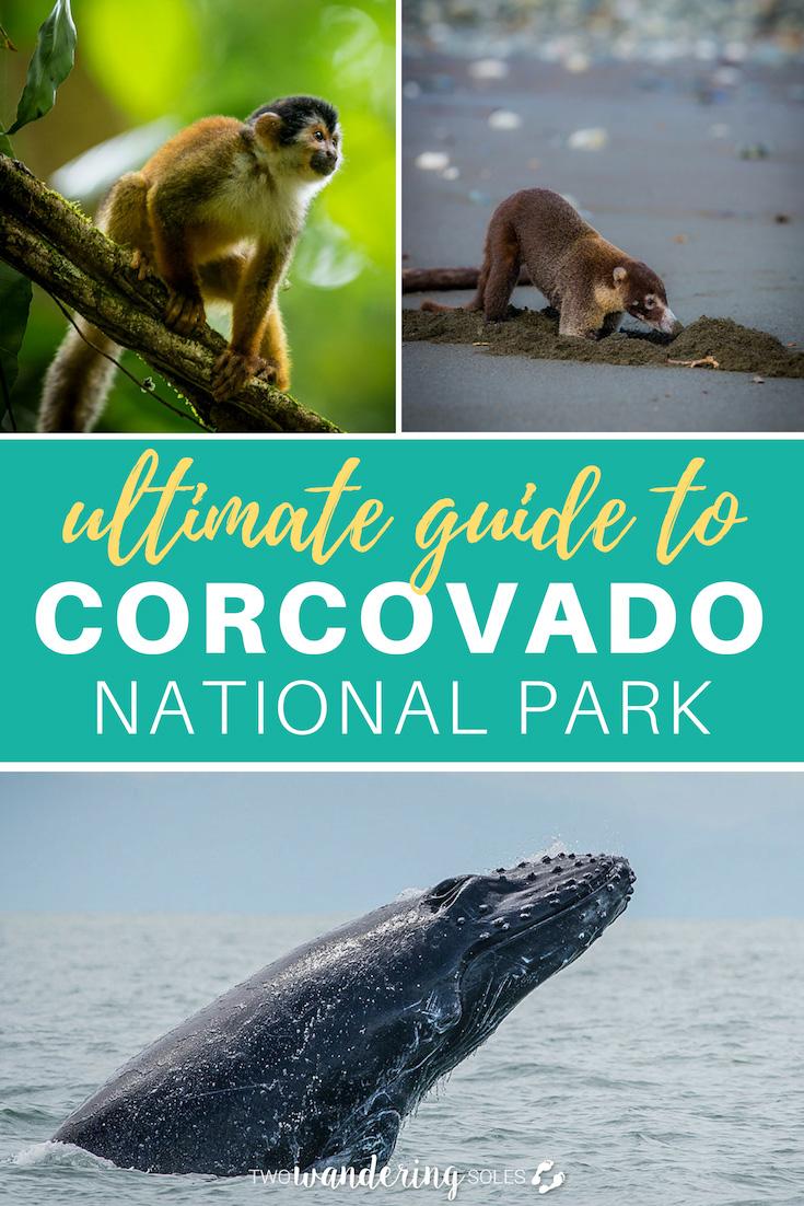 Ulitmate Guide to Corcovado National Park Costa Rica