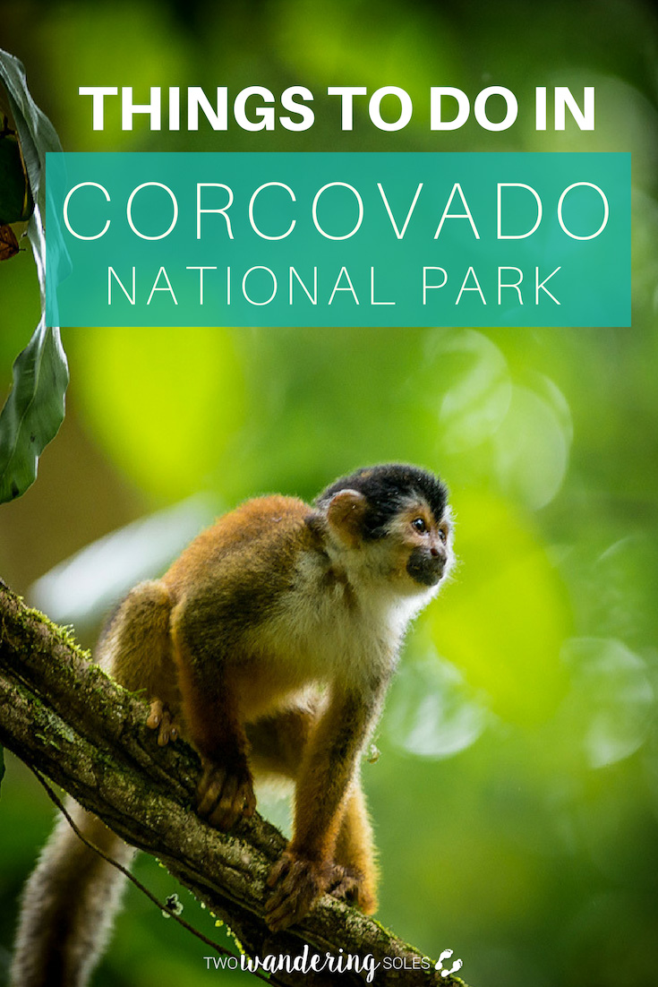 Ulitmate Guide to Corcovado National Park: Things to Do in Costa Rica's Best Kept Secret