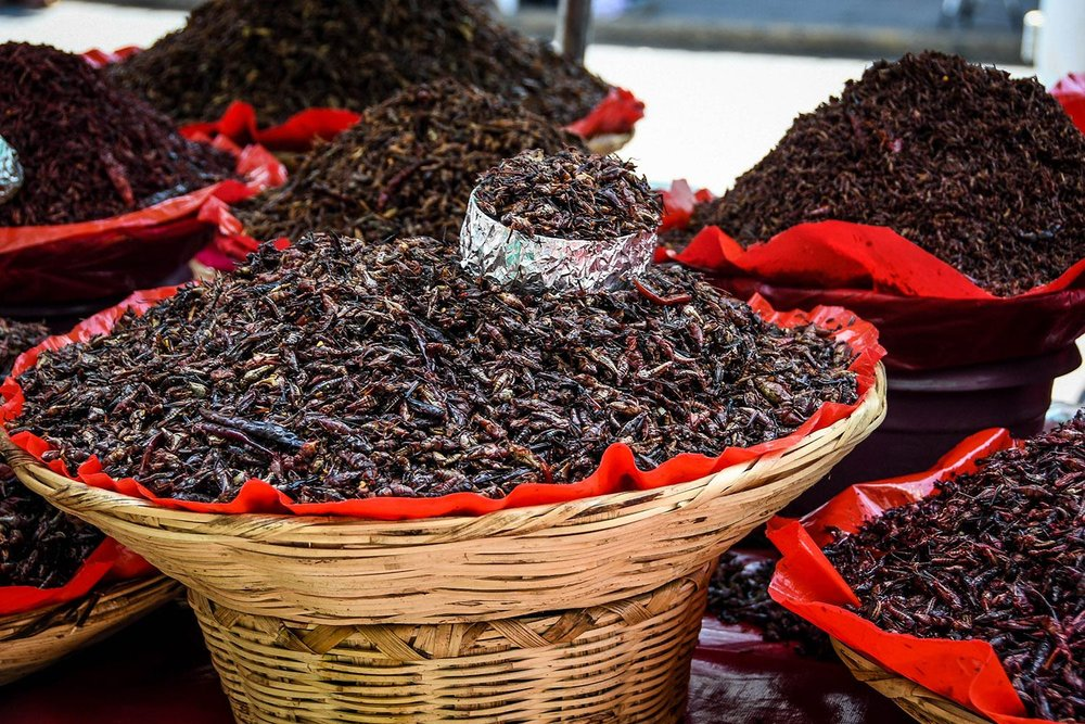 Things to Do in Oaxaca Mexican Food Chapulines Grasshoppers