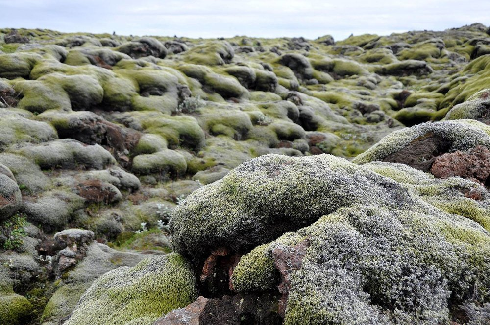 Moss covered lava fields Iceland
