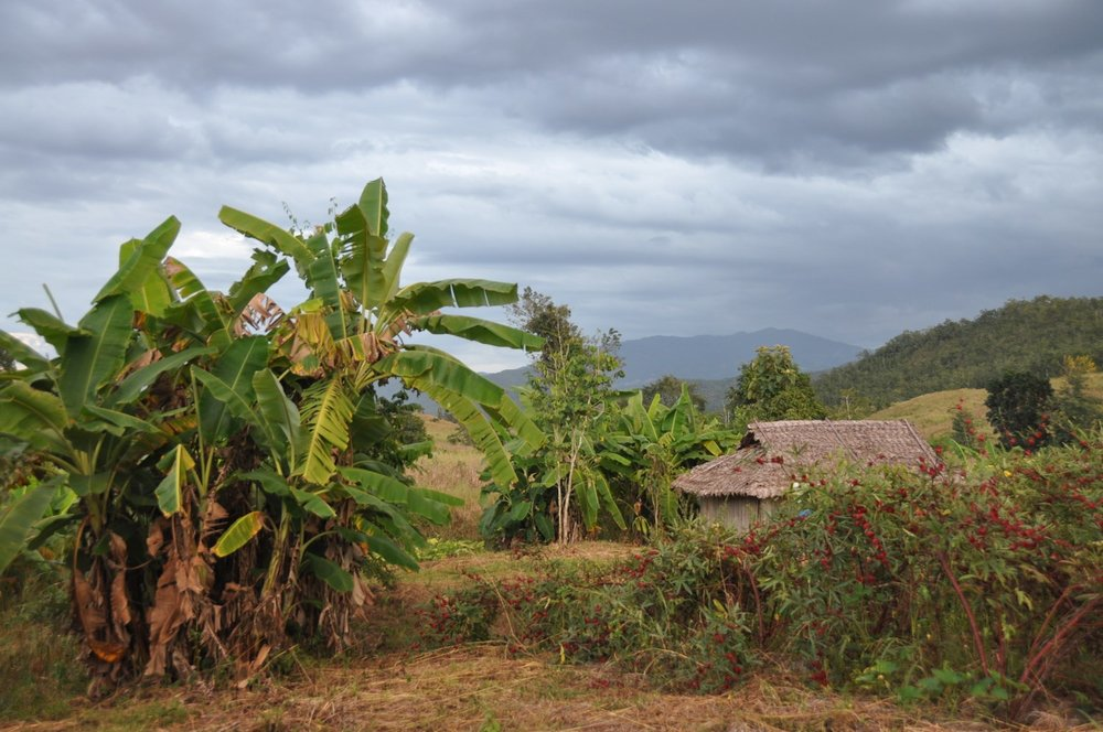 Volunteer Organic Farm Complete Guide to Pai, Thailand