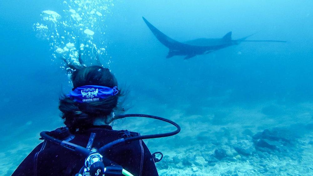 Komodo Liveaboard Manta Point Dive Site