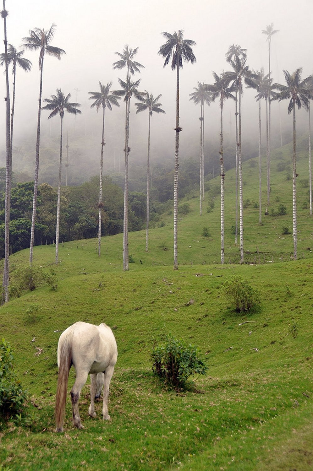 Valle de Cocora photography tips
