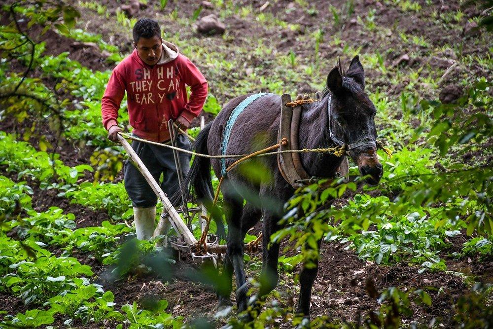 Hiking in Oaxaca's Sierra Norte Horse and plow farmer